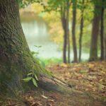 Ładny oraz {czysty ogród to nie lada wyzwanie, zwłaszcza jak jego pielęgnacją zajmujemy się sami.